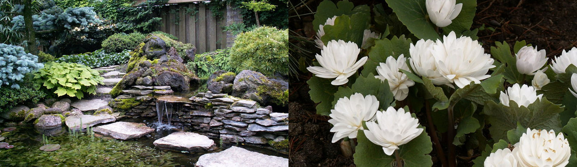 De schoonheid van een tuin